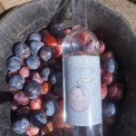 edv prune fruit r 150x150 - Eau de vie de Prune
