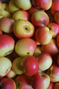 r passerose 200x300 - L'Amusette  : ratafia de pomme passerose