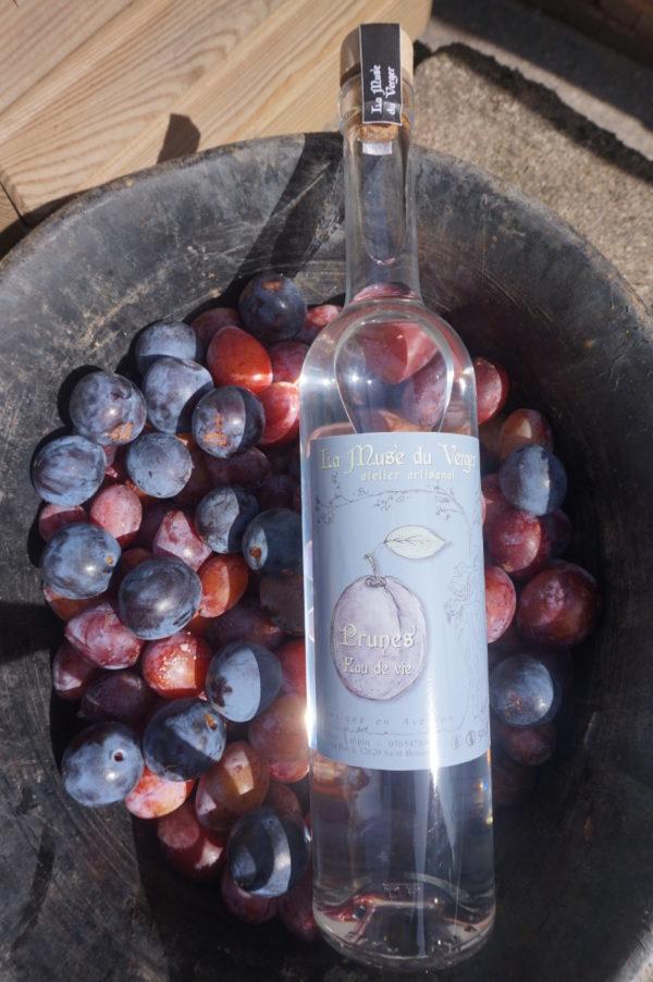 edv prune fruit r 600x902 - Eau de vie de Prune 50cl